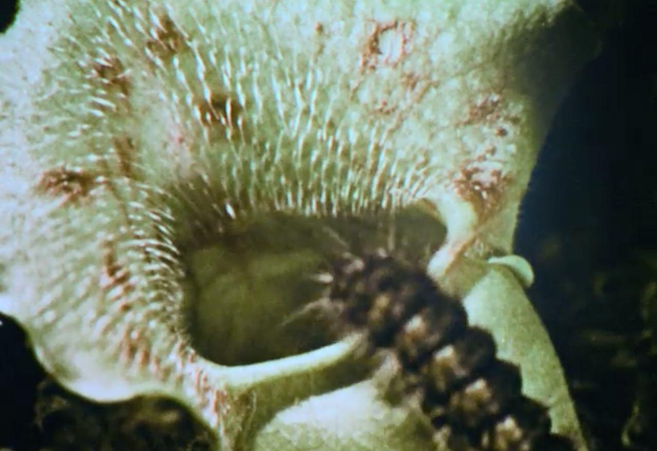 Carnivorous Plants Easy Resize.com